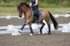 Fei Dressage pony - goofy